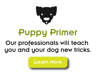 Puppy Primer, Our professionals will teach you and your dog new tricks. Learn More