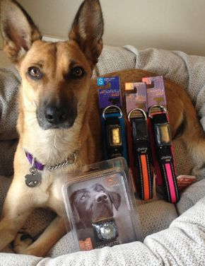 dog with products