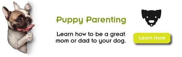 Puppy Parenting, Learn how to be a great mom or dad to your dog. Learn More